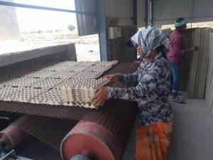 India egg tray production line