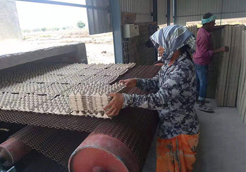 egg tray production line in India
